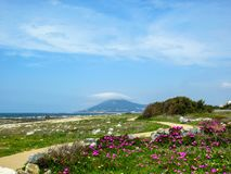 Spring landscape with blooming wild pink flower carpet and curve path on the Atlantic Ocean coast, Portugal, Europe stock images