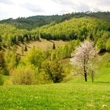 Spring landscape with blossomed tree Stock Photos