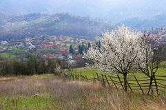 Spring landscape with a blossomed tree Stock Photography