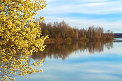 Spring landscape with a blossoming tree and the river Royalty Free Stock Photography
