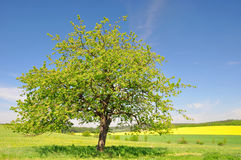 Spring landscape. With blue sky Stock Photography
