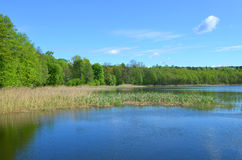 Spring landscape with blue sky, green trees, water herbs and a calm lake Stock Image