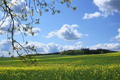 Spring landscape with branch royalty free stock photography