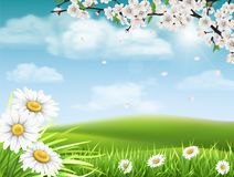 Spring landscape with branch  and daisies. Spring landscape with a flowering branch of a tree with grass and daisies in the foreground Stock Image