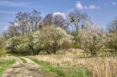 Spring landscape with bushes and trees. Dirt road, tree with mistletoe, spring landscape with bushes and trees, white clouds stock photo