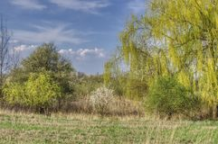 Spring landscape with bushes and trees royalty free stock photography