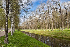Spring landscape with the canal and birches Royalty Free Stock Photo
