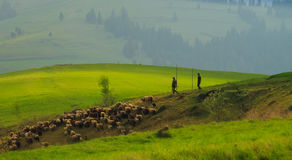 Spring landscape in the Carpathian mountains with stock photography