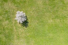 Spring landscape with cherry tree in blossom. aerial view stock image