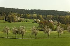 Spring landscape with cherry trees in Germany Royalty Free Stock Images