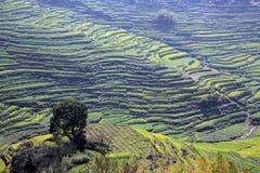 Spring landscape China royalty free stock photo