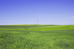Spring landscape. A clean and sunny landscape Stock Photos