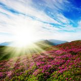 Spring landscape with the cloudy sky and colors Stock Photos