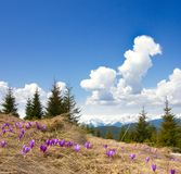 Spring landscape with the cloudy sky and Flower Royalty Free Stock Image
