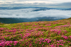 Spring landscape with the cloudy sky and Flower Royalty Free Stock Images
