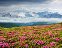 Spring landscape with the cloudy sky and Flower Stock Images