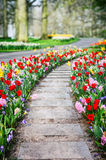 Spring landscape with colorful tulips and hyacinths Royalty Free Stock Image