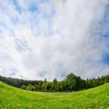 Spring landscape concept. Fresh green meadow surrounded by forest. Royalty Free Stock Photo