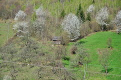 Spring landscape with cottage and trees in blossom. Royalty Free Stock Photo