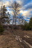 Spring landscape in the country. Country road, birch, sunset Stock Photos