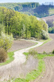Spring landscape, Czech Republic Royalty Free Stock Image