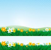 Spring landscape with daffodils Stock Photo