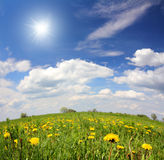 Spring landscape with dandelion flowers Royalty Free Stock Photo