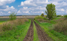 Spring landscape with dirty road Stock Images