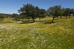 Spring landscape of extremadura Stock Photo
