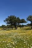 Spring landscape of extremadura Stock Photography