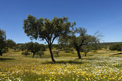 Spring landscape of extremadura Royalty Free Stock Images
