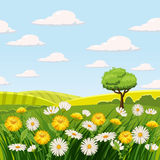 Spring landscape, farm, fields, meadows, daisies and dandelions. Spring landscape fields meadows daisies and dandelions, grass, greeting, , Cartoon style, vector Stock Image