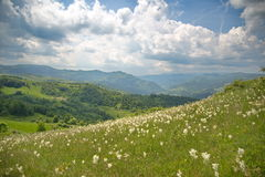 Spring landscape with field of flowers and Apuseni mountains Royalty Free Stock Photography