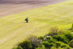 Spring landscape with field Stock Photos
