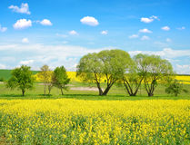Spring landscape with field of rapeseed Royalty Free Stock Photography