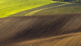 Spring landscape with field and vineyard Stock Photography