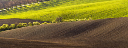 Spring landscape with field Royalty Free Stock Photography