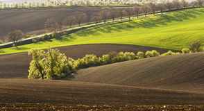 Spring landscape with field Stock Photo