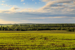 Spring landscape, a field with wheat seedlings. Can be seen in the distance houses, trees, and other fields Royalty Free Stock Images