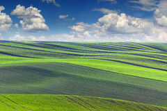 Spring Landscape of fields in beautiful striped hills valley Stock Images