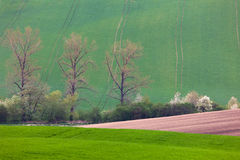 Spring landscape of fields and blossom trees -  background Royalty Free Stock Image