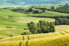 Spring landscape of fields Tuscany, Italy Royalty Free Stock Photo