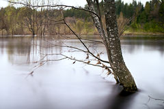 Spring landscape flood river tree in water long exposure smooth water selective focus. Royalty Free Stock Image