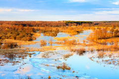 Spring Landscape With Flooded Trees Royalty Free Stock Photography