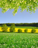 Spring landscape Royalty Free Stock Image