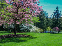 Scenic Spring Landscape - Flowering Dogwood Trees. Beautiful rolling Spring landscape of manicured lawn, flowering Dogwood trees with pines and stream in the Stock Photos