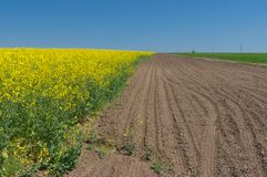 Landscape with flowering agricultural field. Spring landscape with flowering agricultural field stock images