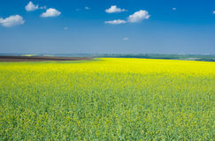 Spring landscape with flowering rape-seed field Royalty Free Stock Photo