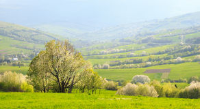 Spring landscape: Flowering slopes of the Carpathi. Spring evening landscape: green flowering slopes of the Carpathian Mountains Royalty Free Stock Images