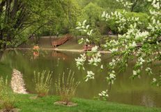 Spring landscape. Flowering tree by the pond stock photos